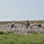 Ballade à cheval en Camargue par  -   Bouches-du-Rhône Provence France