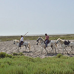 Ballade à cheval en Camargue par Dam.R -   Bouches-du-Rhône Provence France