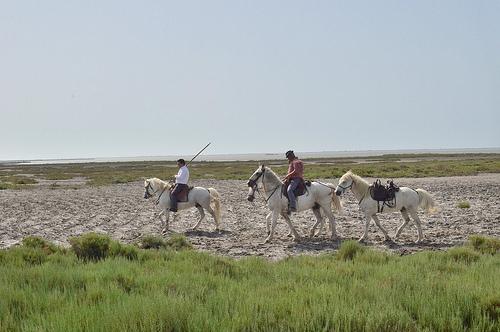 Ballade à cheval en Camargue by Dam.R