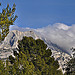 Entre les arbres - Le sommet de la montagne Sainte-Victoire par Charlottess - Le Tholonet 13100 Bouches-du-Rh&ocirc;ne Provence France