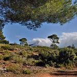 Au loin - la Sainte-Victoire par Charlottess - Le Tholonet 13100 Bouches-du-Rhône Provence France