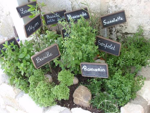 Les Herbes de Provence réunies  par Eduardo & Nara