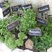 Les Herbes de Provence réunies  by Eduardo & Nara - Les Baux de Provence 13520 Bouches-du-Rhône Provence France