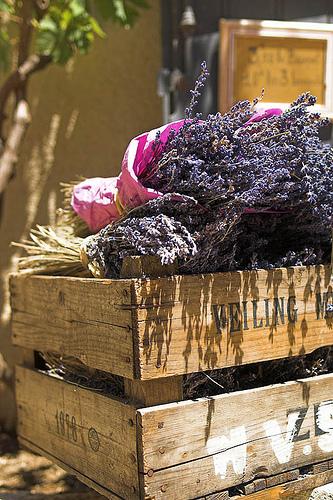 Lavender Le Baux by Authentic Provence