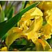 Iris au coeur - Baux-de-Provence by Charlottess - Les Baux de Provence 13520 Bouches-du-Rhône Provence France