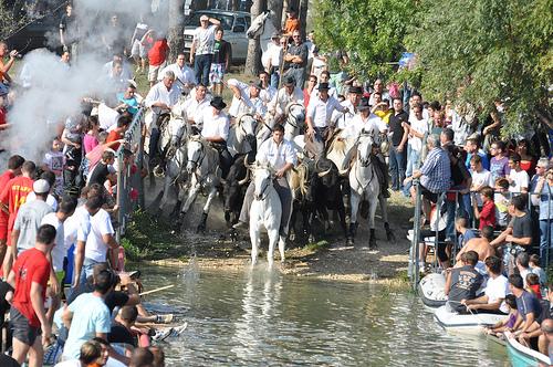 Trois Gaso - Traversée du lac par les taureaux des manades by salva1745