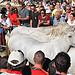 Trois GASO de chevaux - Traversée du Lac du Barreau par salva1745 - Maillane 13910 Bouches-du-Rhône Provence France
