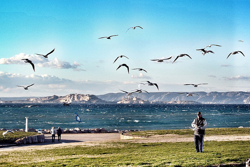 Feeding birdies - plage bonneveine by Paris - Mérida - Marseille