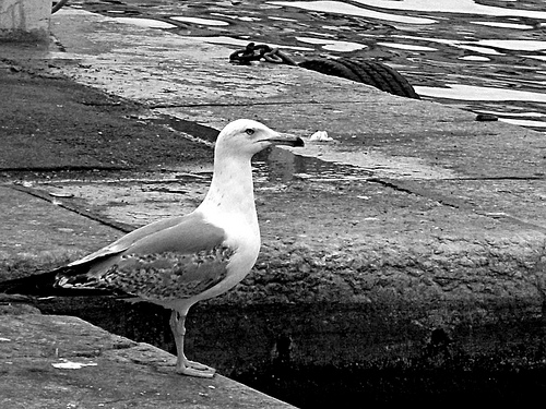 Seagul from Marseille by JM5646