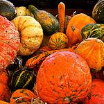 légumes oubliés sur le marché de Marseille by Fanette13 - Marseille 13000 Bouches-du-Rhône Provence France