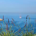 Joli brin de lavande par Fanette13 - Marseille 13000 Bouches-du-Rhône Provence France