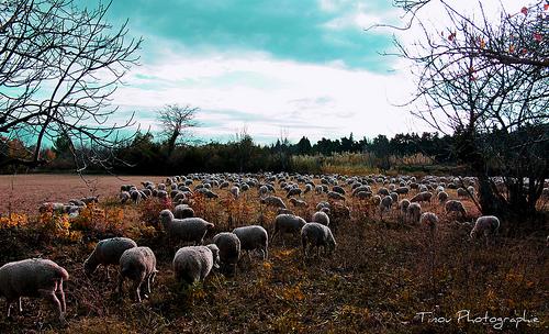 Il fait bon passer l'hiver dans la vallée des Baux by Tinou61