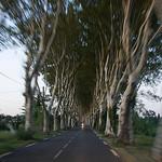 Allée de platanes par MaJuCoMi - Miramas 13140 Bouches-du-Rhône Provence France