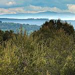 Ventoux vu du massif du Montaiguet par  - Aix-en-Provence 13100 Bouches-du-Rhône Provence France