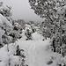 Neige à la montagne Sainte-Victoire by bruno Carrias - Puyloubier 13114 Bouches-du-Rhône Provence France