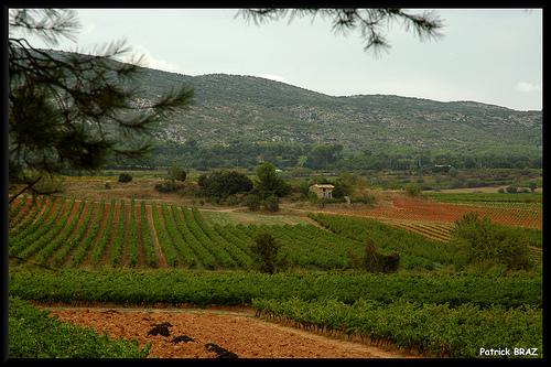 Vignoble au pied de la montagne Sainte-Victoire par Patchok34