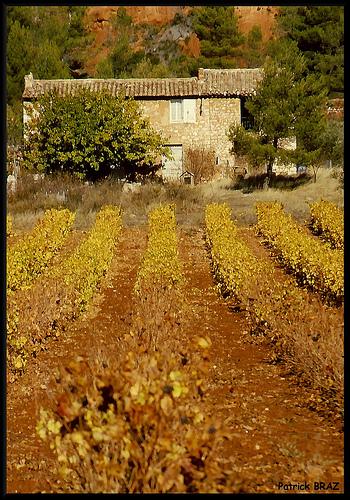 Mas dans les vignes par Patchok34