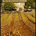 Mas dans les vignes par Patchok34 - Puyloubier 13114 Bouches-du-Rhône Provence France