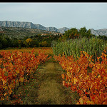 Vue de la Sainte- Victoire depuis les vignes(13) par  - Puyloubier 13114 Bouches-du-Rh&ocirc;ne Provence France