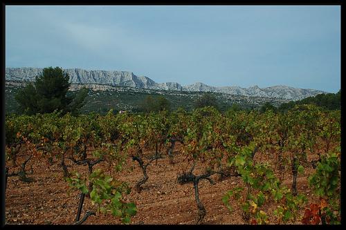 Vignoble & Montagne Sainte-Victoire par Patchok34