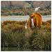 Cohabitation en camargue : cheval et héron blanc by V A - Saintes Maries de la Mer 13460 Bouches-du-Rhône Provence France