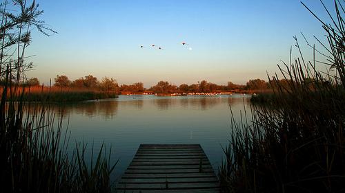 Flamingo pontoon by Boccalupo