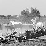 Chevaux- Saintes Maries de la mer - Capitale de la Camargue par Massimo Battesini - Saintes Maries de la Mer 13460 Bouches-du-Rhône Provence France
