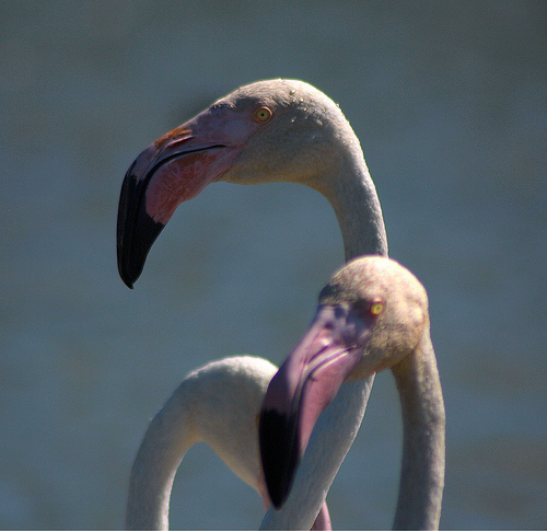 Tête de flamand rose by imboscata
