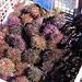 Les fameux oursins de Sausset-les-Pins par Bernard Bost - Sausset les Pins 13960 Bouches-du-Rhône Provence France