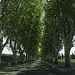 Allée de platanes sur la D7N Saint-Cannat (France) par Meteorry - St. Cannat 13760 Bouches-du-Rhône Provence France