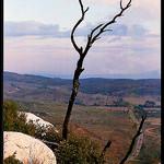 Reste d'un pin brûlé sur la Sainte-Victoire by Patchok34 - St. Antonin sur Bayon 13100 Bouches-du-Rhône Provence France