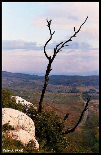 Reste d'un pin brûlé sur la Sainte-Victoire by Patchok34