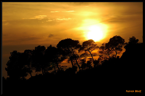 Le soleil se cache derrière les pins by Patchok34