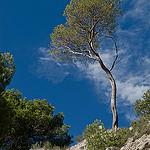 Randonnée dans les sentiers de la Sainte-Victoire par jenrif - St. Antonin sur Bayon 13100 Bouches-du-Rhône Provence France