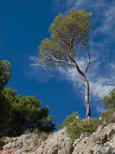 Randonnée dans les sentiers de la Sainte-Victoire by jenrif
