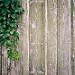 La porte mystérieuse par yoan.mollemeyer - St. Chamas 13250 Bouches-du-Rhône Provence France