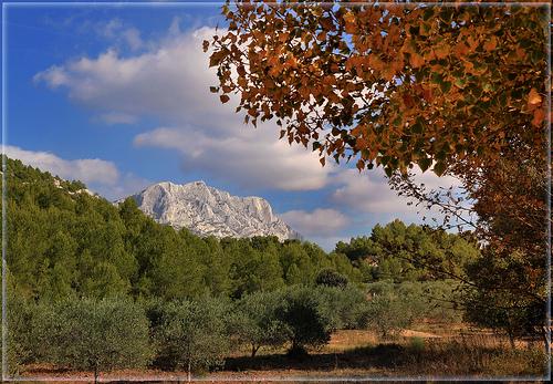 Le sommet de la Sainte-Victoire au dessus des oliviers par Charlottess