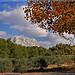 Le sommet de la Sainte-Victoire au dessus des oliviers par Charlottess - St. Marc Jaumegarde 13100 Bouches-du-Rhône Provence France