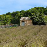 Van Gogh Garden by richieJ1 - St. Rémy de Provence 13210 Bouches-du-Rhône Provence France