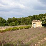 Van Gogh's Field par casey487 - St. Rémy de Provence 13210 Bouches-du-Rhône Provence France