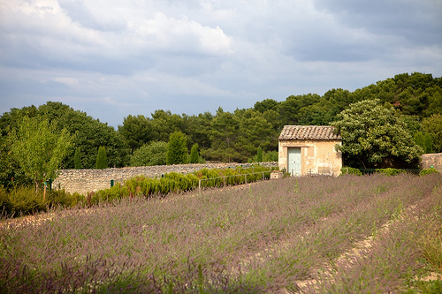Van Gogh's Field par casey487