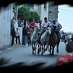 Bandido : le retour des taureaux par salva1745 - St. Rémy de Provence 13210 Bouches-du-Rhône Provence France