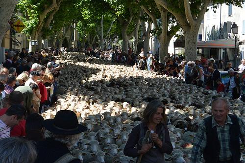30ème Fête de la Transhumance, les moutons sont dans la rue ! by salva1745