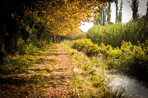 Autumn perspective in Tarsacon by ethervizion