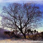 Au détour d'un chemin ... un arbre majestueux par Tinou61 - Vauvenargues 13126 Bouches-du-Rhône Provence France