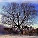 Au détour d'un chemin ... un arbre majestueux by Tinou61 - Vauvenargues 13126 Bouches-du-Rhône Provence France