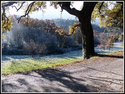 Givre sur le sol, l'avancement de brouillard, provence en hiver by J@nine