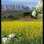 Le printemps au pays de Cézanne par Patchok34 -   Bouches-du-Rhône Provence France