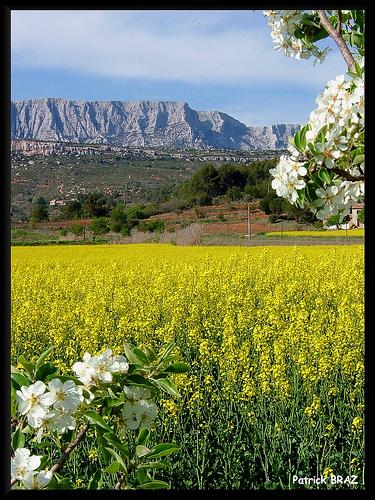 Le printemps au pays de Cézanne par Patchok34