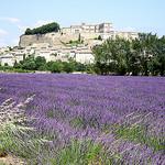 Grignan et ses champs de lavande par Thierry62 - Grignan 26230 Drôme Provence France